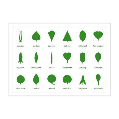 Botany Leaf Cabinet Control Chart - PP Plastic