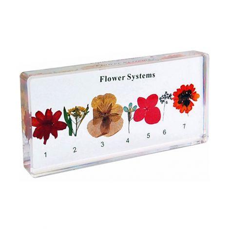 Flower Systems Specimen