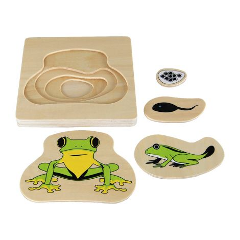 Frog Life-Cycle Puzzle