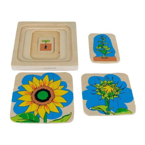 Sunflower Life-Cycle Puzzle