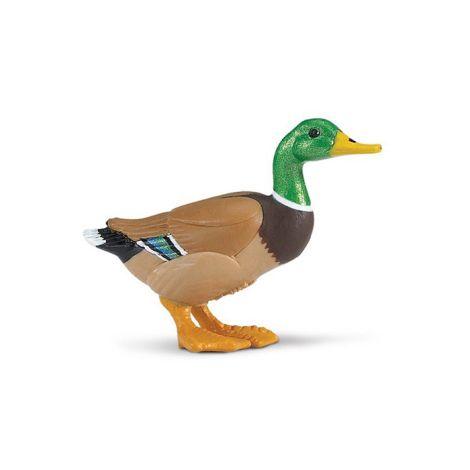 Farm Duck