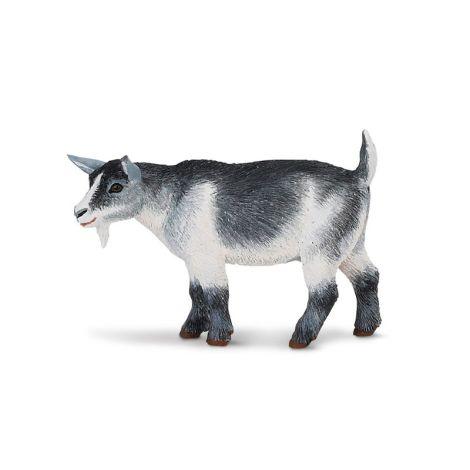 Farm Pygmy Nanny Goat