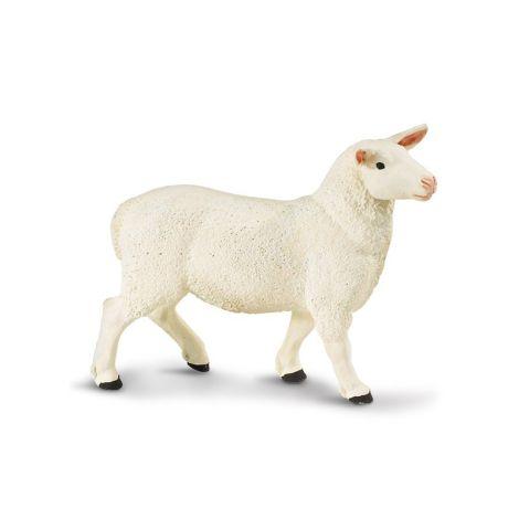 Farm Ewe
