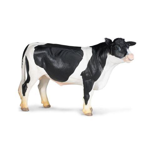 Farm Holstein Bull