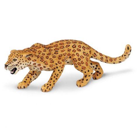 Wild Jungle Leopard