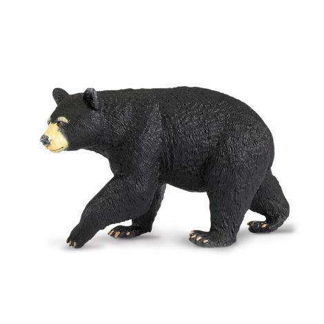 Wild Forest Black Bear