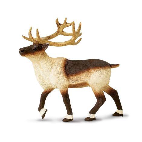 Wild Forest Reindeer