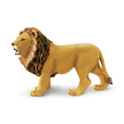Wild Jungle Lion