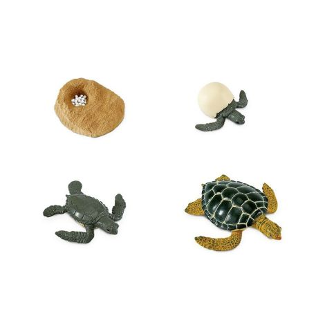 Life Cycle Of A Green Sea Turtle